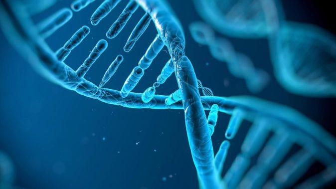 Genetik Etkenler